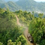 Illegal logging to be curbed, Nations intensifies efforts