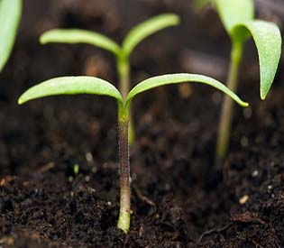 human rights observers plants listen to the good vibes of other plants environment