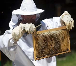 human rights observers - sugar-craving honeybees trained in croatia to find land mines eu crisis1