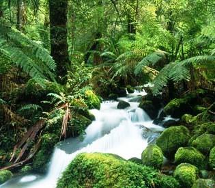 hromedia - A few tree species dominate Amazon