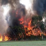 Australia wildfires destroy homes in New South Wales