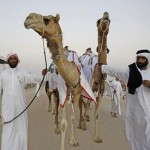 Camel beauty contest, Abu Dhabi festival attracts 25,000 entries