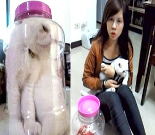 hromedia Taiwanese girl stuffs pet cat into jar, posts picture on Facebook intl. news2