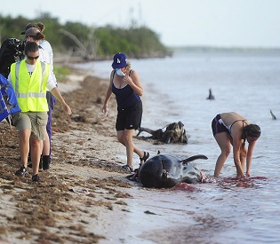 hromedia At least 20 whales found dead off Florida's coast environment2