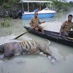 India wildlife reserve park devastated by monsoon floods